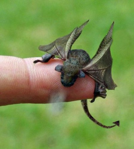 Welsh Dragon successfully hatched at Bangor University
