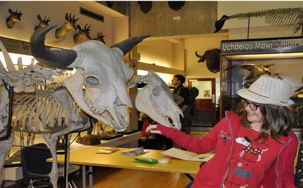 Open Day at Bangor University's Natural History Museum