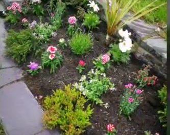 Local resident rejuvenates Maesgeirchen flowerbed