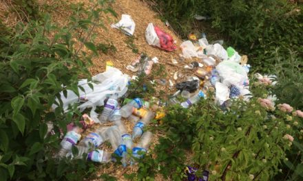 Persistent Bangor fly-tipper given fixed penalty notice