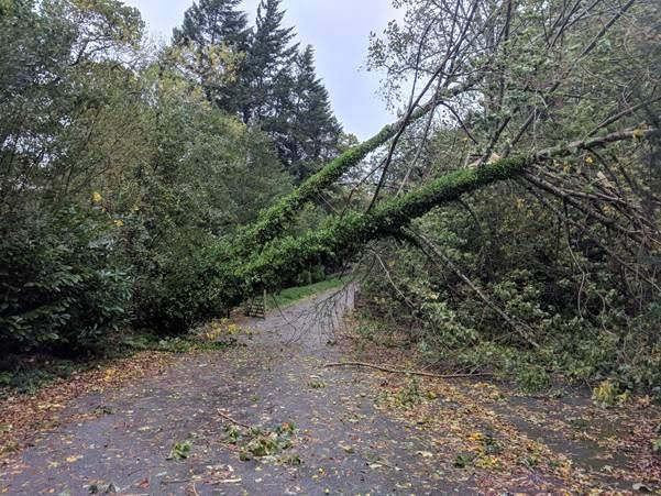 Storm Callum wreaks havoc across North Wales
