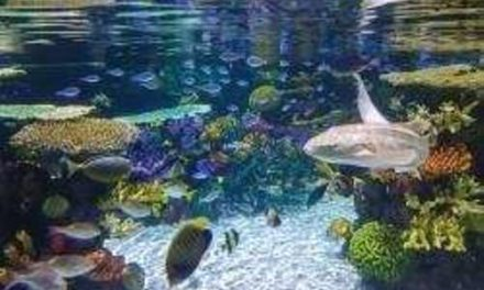 Rare tropical fish breeding to improve thanks to Bangor University
