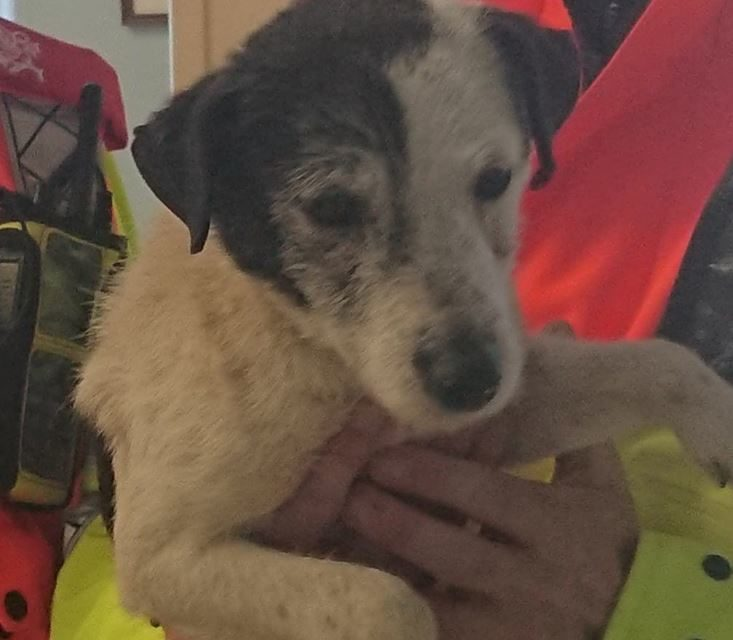 Appeals for owner after dog found on the A55 at Llandygai