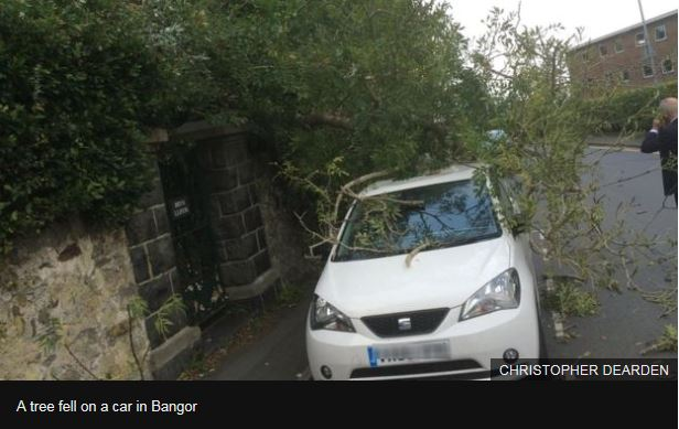Tree falls on Car in Bangor during Storm Ophelia