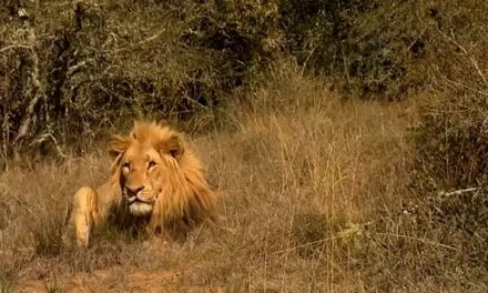 "Watch ""Secrets of the Savannah"" an amazing wildlife film by Bangor University student Ryan Eddowes"