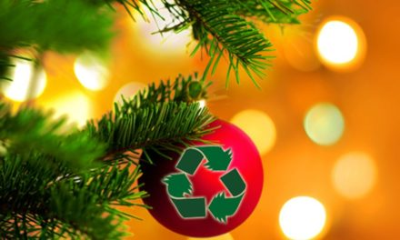 Gwynedd Council Christmas tree collection & recycling guide