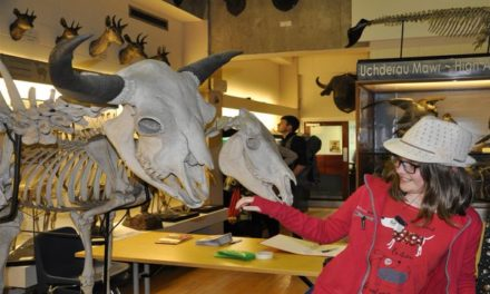Prepare to be amazed at Bangor University's Natural History Museum