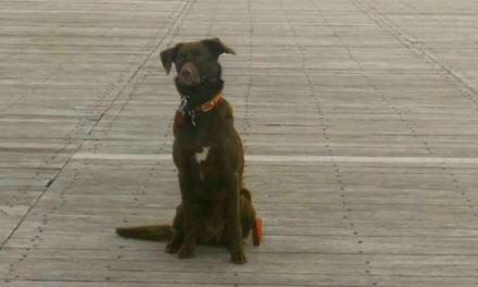 Policy of allowing dogs on Bangor Pier to be made permanent