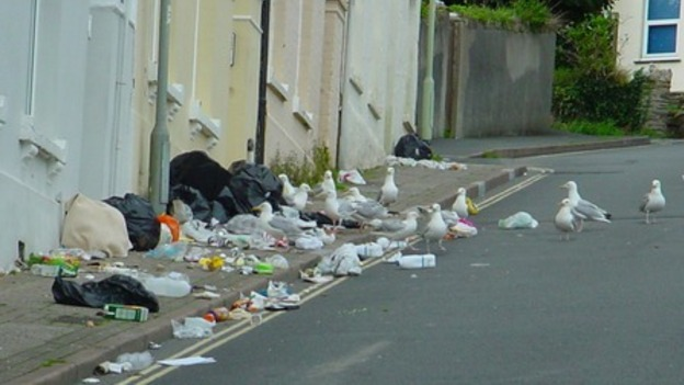 Don't feed the gulls! Gwynedd council's campaign to keep towns safe and tidy