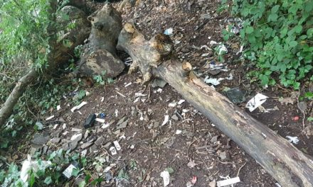 Warning after discarded needles found on Bangor footpath