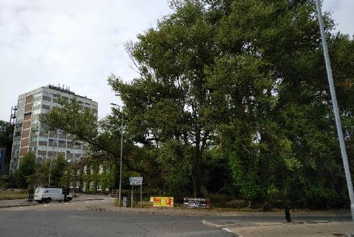 Tree felling application at controversial Deiniol Road site